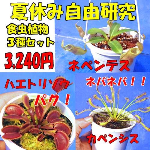 【ご奉仕価格】食虫植物3種セット ネペンテス ハエトリソウ カペンシス