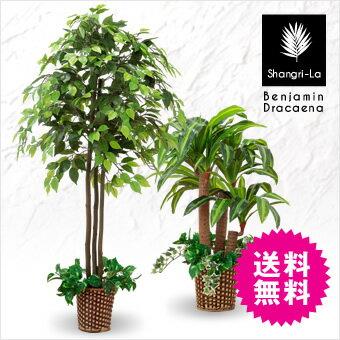 楽天1位 人工観葉植物 光触媒 ベンジャミン 幸福の木 ドラセナ フェイクグリーン インテリアグリーン 2本セット