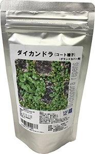 福花園種苗 ダイカンドラ種子(コート種子)100mL詰 (グランドカバー用)
