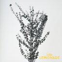 【ユーカリ・ベビーブルー グリーン】ドライフラワー 葉っぱ 枝 ユーカリ インテリア ボタニカル 花 飾り テーブル装…