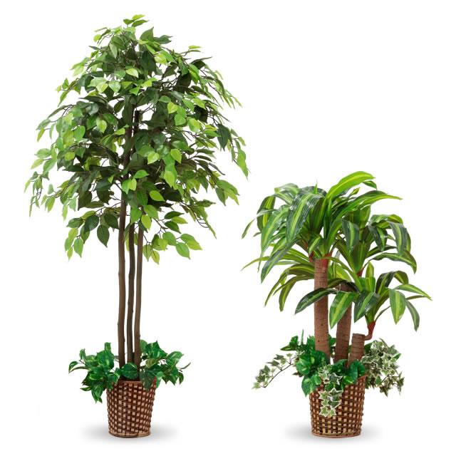 人工観葉植物 2本セット インテリア 光触媒 ベンジャミン 幸福の木 ドラセナ フェイクグリーン インテリアグリーン オフィス 造花 オフィス グリーン 観葉植物