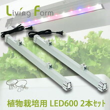 植物栽培用LED6002本セット