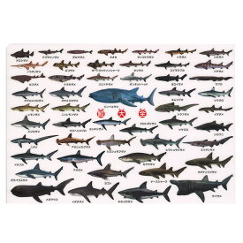 ザ・アクセス 鮫大全 下敷き(A4サイズ,図鑑タイプ)50種類の鮫(サメ)を網羅!