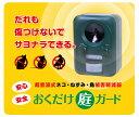 【先着100個限定!特別価格!!】猫よけ、ねずみよけ、鳥よけに!《おくだけ庭ガード》超音波ネコ・ねずみ・鳥被害軽減器 電池交換不要のソーラー式