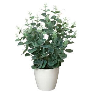 ユーカリ H42cm 鉢植え プラント 3A5206-60