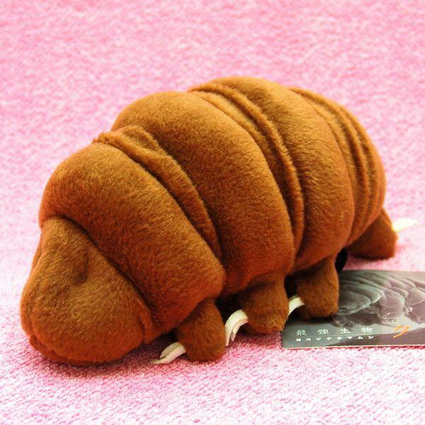最強生物 ヨコヅナクマムシ M サイズ:18.5cm Water bear/Tardigrades/Ramazzottius varieornatus