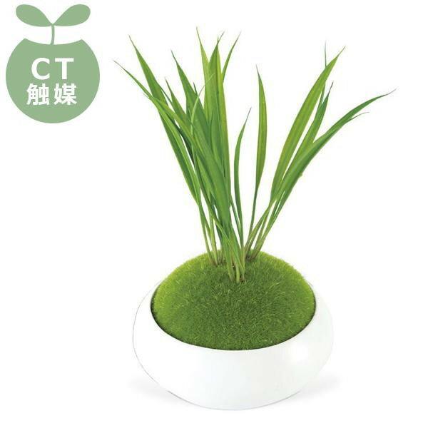 WA BONSAI(和盆栽) DEODORANT ARTIFICIAL GREEN 消臭アーティフィシャルグリーン Narcissus(スイセン) KH-61062