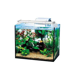 テトラ オールグラスアクアリウム300 熱帯魚セット(ペット用品)