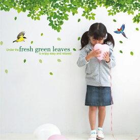 ウォールステッカー 鳥と木々 グリーン 2枚組 はがせる 北欧 ツリー グリーン 植物 リーフ ガーデニング シール おしゃれ トイレ インスタ 映え モノトーン 壁紙 英字 ポスター