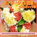 カーネーションの花束〜黄色&オレンジ〜【父の日】【夏限定】【MIX】【送料無料】【あす楽 関東】