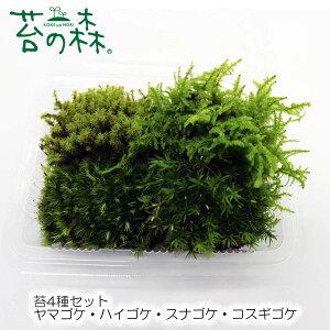 苔の森 苔4種セット ヤマゴケ・ハイゴケ スナゴケ・コスギゴケ Sパック 開放型(フタなし容器でも育てやすいタイプ)のセット 【送料無料】 クリックポストで発送