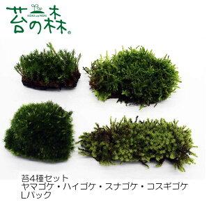 苔の森 苔4種セット ヤマゴケ・ハイゴケ スナゴケ・コスギゴケ Lパック 開放型(フタなし容器でも育てやすいタイプ) 【送料無料】 クリックポストで発送