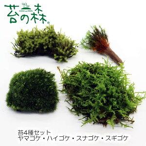 苔の森 苔4種セット ヤマゴケ・ハイゴケ スナゴケ・スギゴケ Lパック 開放型(フタなし容器でも育てやすいタイプ) 【送料無料】 クリックポストで発送