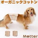 犬用【ボーダー柄マナーベルト】Sサイズ