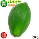 【送料無料】沖縄産 青パパイヤ 約5kg │沖縄野菜 パパイン酵素│