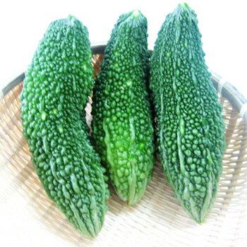 沖縄産ゴーヤー 1kg (にがうり)