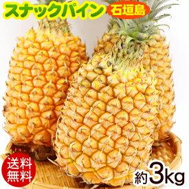 石垣島産スナックパイン 約3kg(2玉〜5玉)【送料無料】 /沖縄産パイナップル
