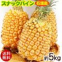 【送料無料】石垣島産スナックパイン 約5kg │沖縄産パイナップル│