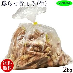 大宜味村産 島らっきょう(生) 泥付き 2kg 【送料無料】 /沖縄産