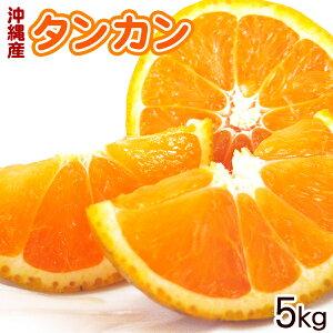 沖縄産タンカン5kg(Mサイズ) 【送料無料】 /たんかん