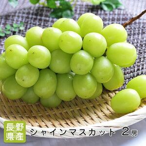 【皮ごと食べれる】 長野県産 シャインマスカット 2房 約1.1kg〜1.2g マスカット 種なし ブドウ ギフト 贈答用 プレゼント お祝い 内祝い