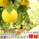 贈答用 楠瀬さん 土佐文旦 3Lサイズ 約10kg 露地栽培 高知県 土佐市 とさぶんたん ぶんたん ブンタン まる庄果樹園 柑橘 …