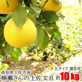 贈答用 楠瀬さん 土佐文旦 3Lサイズ 約10kg 露地栽培 高知県 土佐市 とさぶんたん ぶんたん ブンタン まる庄果樹園 柑橘 くだもの