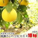 家庭用 楠瀬さん 土佐文旦 約10kg 露地栽培 高知県 土佐市 とさぶんたん ぶんたん ブンタン まる庄果樹園 柑橘 くだもの
