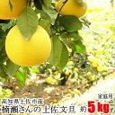 家庭用 楠瀬さん 土佐文旦 約5kg 露地栽培 高知県 土佐市 とさぶんたん ぶんたん ブンタン まる庄果樹園 柑橘 くだもの