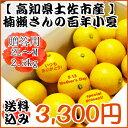 ゆうパック限定!送料込み!【母の日限定】楠瀬さんの百年小夏 2L〜M/2.5kg