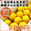 【贈答用】楠瀬さんの百年小夏 2L〜M/2.5kg(日向夏・ニューサマーオレンジ)