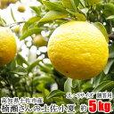 【贈答用】楠瀬さんの土佐小夏 2L〜S/5kg(日向夏・ニューサマーオレンジ)