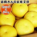 【贈答用】谷岡さんの土佐文旦 2L/5kg