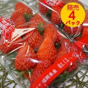 【送料無料】箱売 いちご イチゴ 紅ほっぺ 1箱4パック