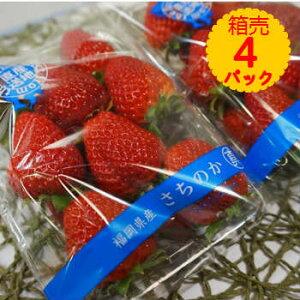 【送料無料】箱売 いちご イチゴ さちのか 1箱4パック