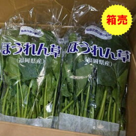 【送料無料】【九州産】箱売 ほうれん草(ホーレンソウ・ホーレン草)1箱(20袋)