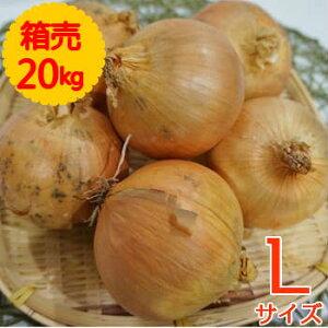 【送料無料!】箱売 たまねぎ(玉ねぎ・タマネギ・玉葱) L玉 1箱(20kg)