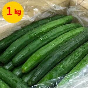 【九州産】単品 きゅうり(キュウリ) 1kg