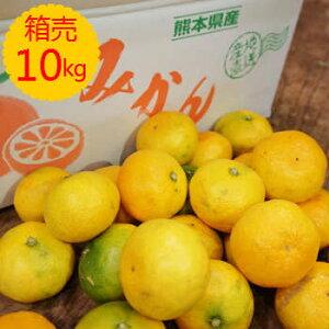 【九州産】【送料無料】箱売 みかん(ミカン 中生・晩生)10kg