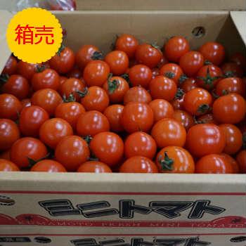 【送料無料】箱売 ミニトマト 1箱3kg