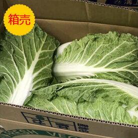 ★クール便送料込み!【九州産】【信州産】箱売り 白菜 1箱(16kg