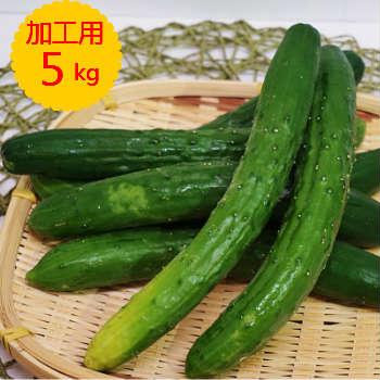 【送料無料】箱売 きゅうり 加工用(キュウリ 漬物用)1箱5kg