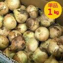【九州産】単品 新玉ねぎ(新たまねぎ・新玉葱) 1kg