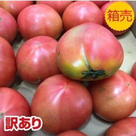 訳あり品【送料無料】【九州産】箱売り トマト(とまと) 1箱 (目安4kg 20〜28玉 満杯詰め)