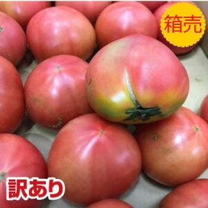 訳あり品【クール便送料無料】【九州産】箱売り トマト(とまと) 1箱 (目安4kg 満杯詰め)