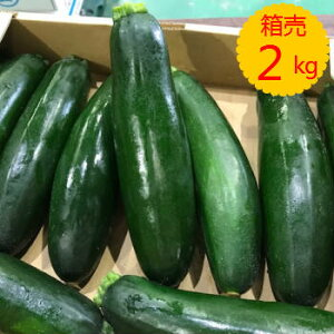 送料無料【九州産】箱売り ズッキーニ 1箱(目安量2kg 10本程度)