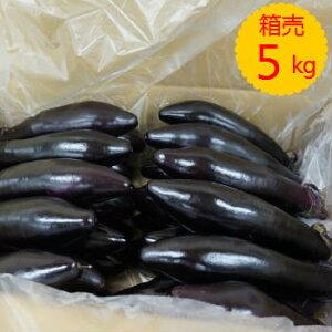 【送料無料】【九州産】箱売 なす(ナス)1箱(約5kg 20〜35本程)