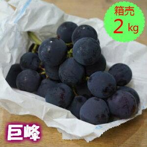 クール便送料無料!【九州産】箱売 巨峰(ぶどう ブドウ)1箱(2kg 4〜6房)