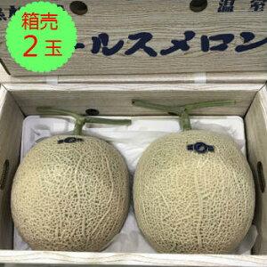 【送料無料】【九州産】箱売 アールスメロン 1箱(2玉入り)