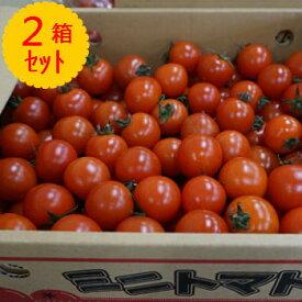 【クール便送料無料】箱売 ミニトマト 1箱3kgを2箱セット!